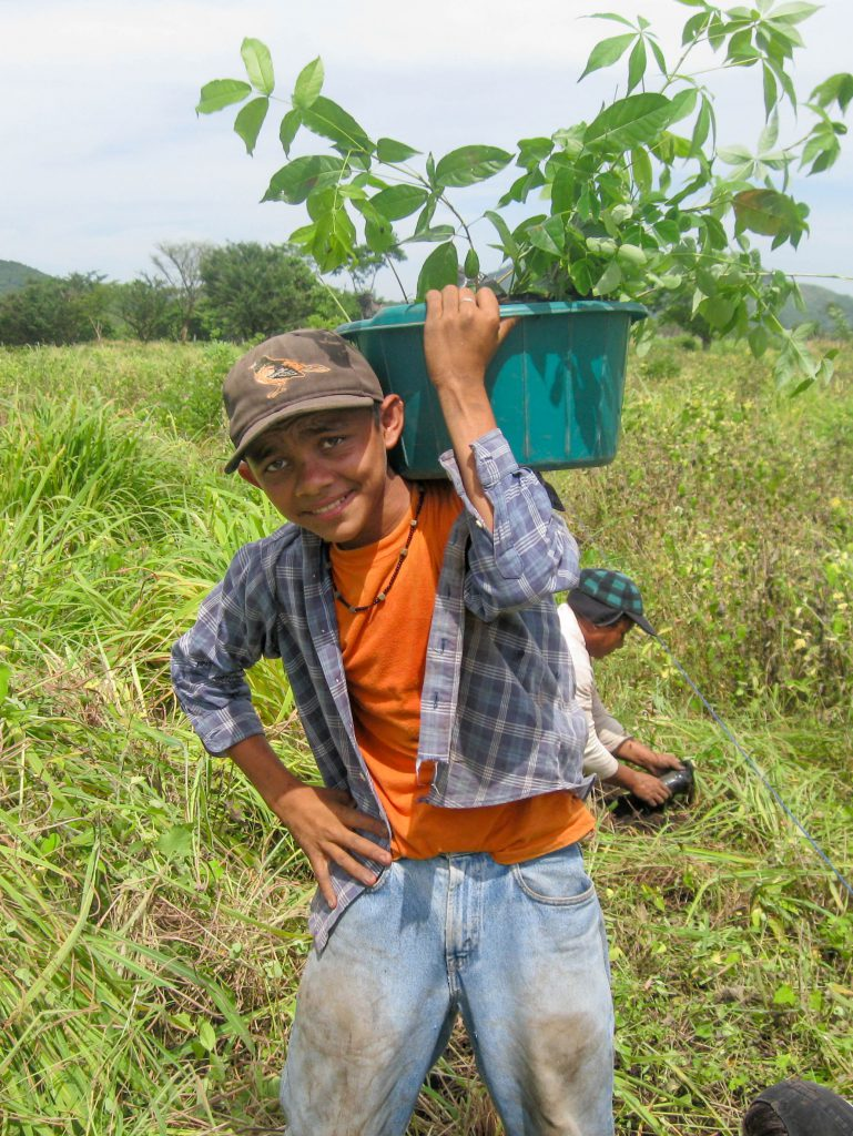 planting_boy_carrying_seedlings_2012_rt_l