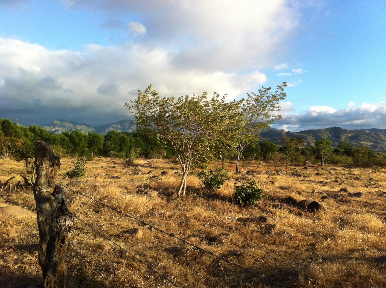 landscape_2012_l
